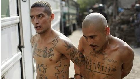 Mayors in so-called sanctuary cities believe these MS-13 thugs must be protected but citizens are expendable?